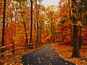blog-fall-in-fort-wayne