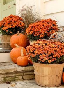 blog-fall-scene