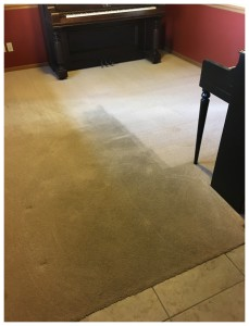 BLOG - Referral Cleans Dirty Carpet Durng