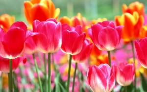 BLOG - Spring Flowers