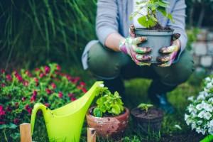 BLOG - Summer Gardening in Fort Wayne