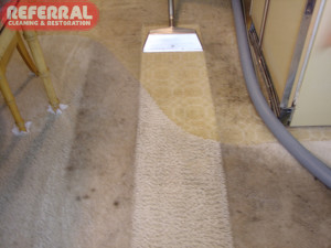 Carpet - 14 Carpet Cleans Up Like New For Referral In This Fort Wayne Home