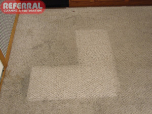 Carpet - 16 Dirty Kitchen Carpet Cleaning Contrast
