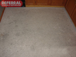 Carpet - 16 Dirty Kitchen Carpet Near Dishwasher