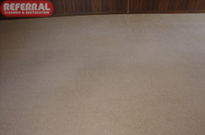 Carpet - 4 Referral restores carpet to like new condition