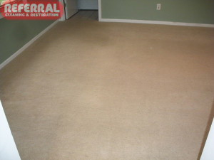 Carpet - 6 Referral Cleaned This Bedroom Carpet To Like New Condition