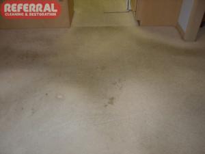 Carpet - 8 Heavily Soiled Traffic Area On Carpet Next To Kitchen