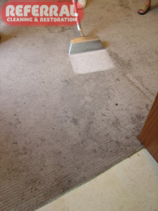 Carpet - Amazing Cleaning Contrast On Olefin Berber Carpet
