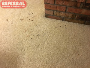 Carpet - Blood spots on carpet in Fort Wayne Home