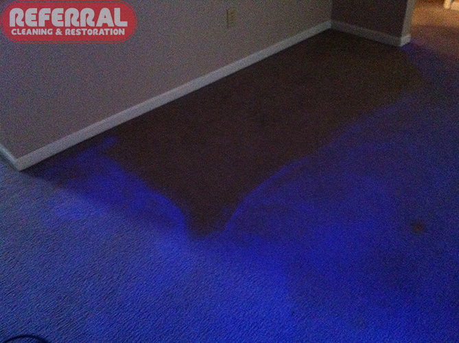 Carpet - Carpet glows, except where sofa was, under a black light from do