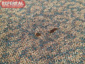 Carpet - Cigarette Burn in Carpet