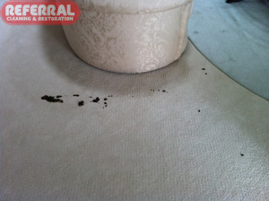 Carpet - Dog Poop - Feeces On Carpet