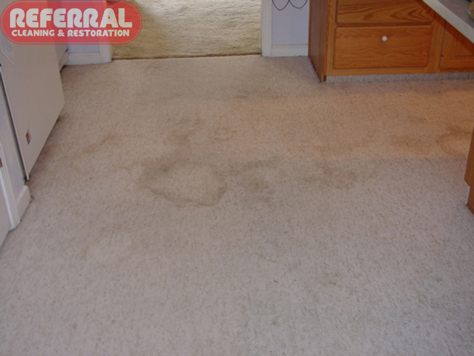 Carpet - Food & Drink Stains On Kitchen Light Colored Carpet