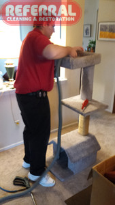 Carpet - Referral Can Clean Anything With Carpet On It Even A Cat Stand!