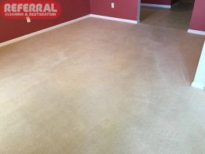 Carpet - Referral Saved This Carpet Cleaning it up like new