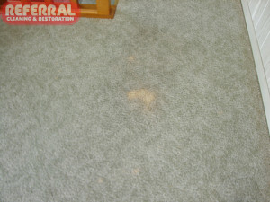 Carpet - Some Carpet Spot Cleaners Are So Strong They Can Remove Color From Carpet