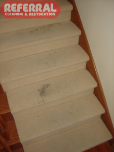 Carpet - Steps With Dirty Wool Carpet