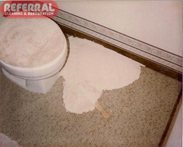 Carpet - White Paint spilled all over carpet