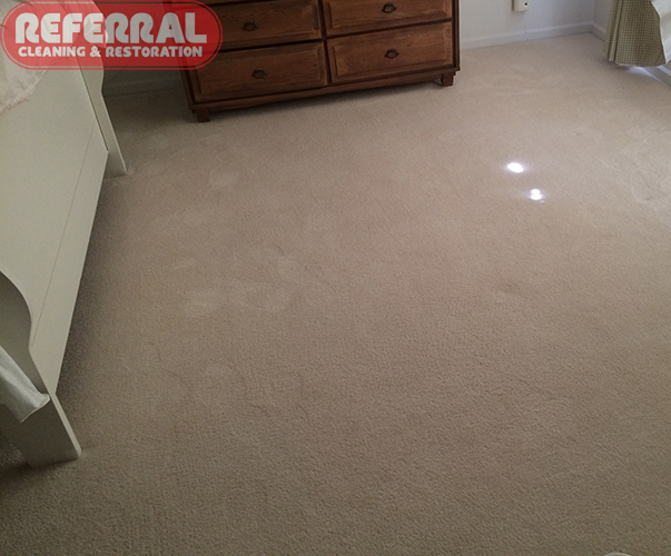Carpet - Yellow Pet Urine Spots Removed Completely From Carpet
