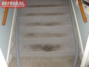 Commercial - Dirty Carpeted Stairs
