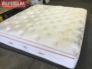 mattress-mattress-4-1-brown-water-stain-and-black-mildew-mold-stain-on-an-expensive-mattress-that-was-water-damaged-in-fort-wayne