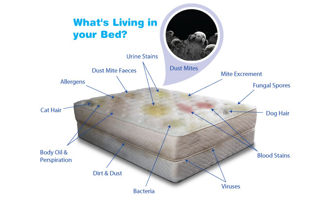 how to kill fleas in bed mattress