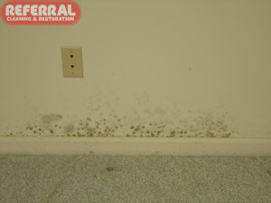 Mold - Mold growing on drywall