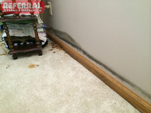Mold - Mushrooms and Black Mold Growing In Water Damaged Basement