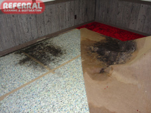 Mold - Water leak caused mold on jute back carpet and pad
