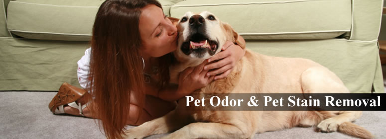 Pet - MAIN Pet Stain And Odor Removal