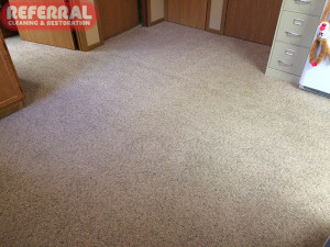 Pet - Pet Urine Spots Cleaned Out of Carpet