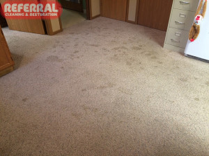 Pet - Pet Urine Spots On Carpet
