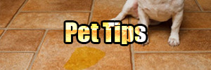 Pet Stain & Odor Tips