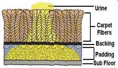 Pet - Urine Diagram