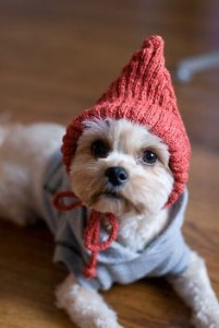 Blog - Cold Yorkie